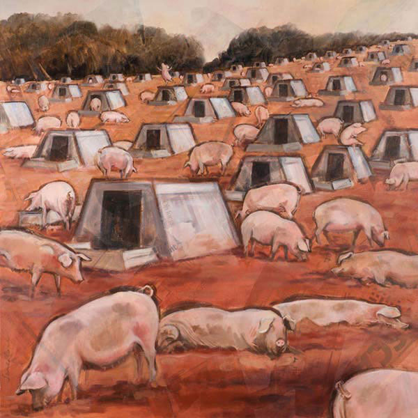Pigs at Hayes Barton 2 - Oil and mixed media on canvas, 90 x 90cm, SOLD, print available