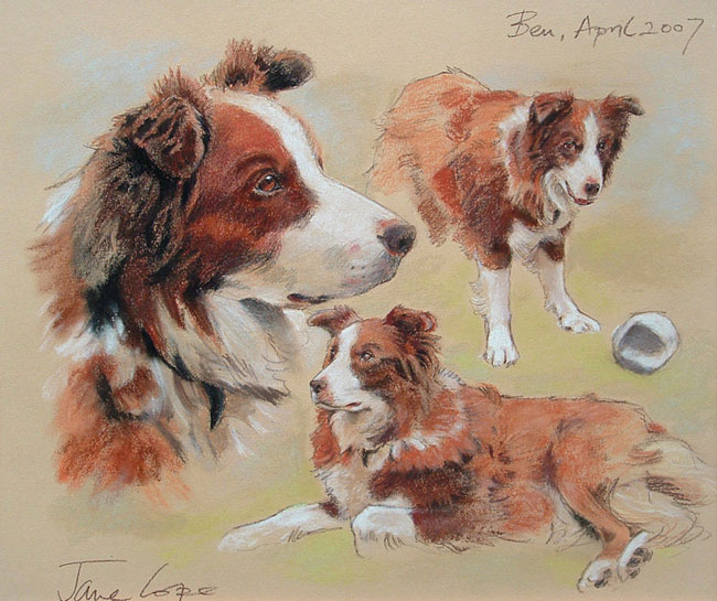 Ben the dog by Jane Cope