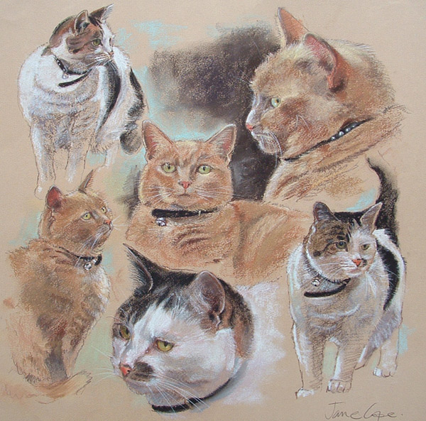 Cats by Jane Cope